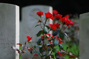 cemetery_roses[1]
