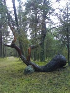 Imeliku kujuga puu